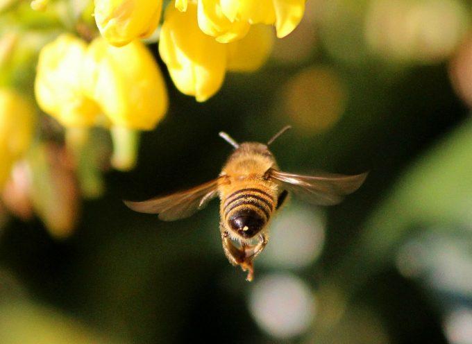 Made in abeilles, une ruche aux couleurs du Pass