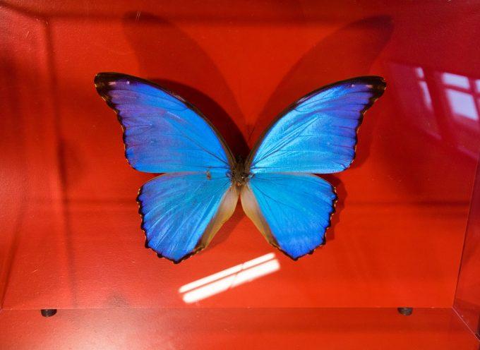 Du papillon Morpho au panneau solaire