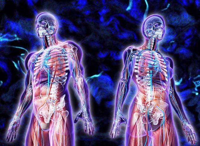 L'interstitium, nouvel organe du corps humain ?